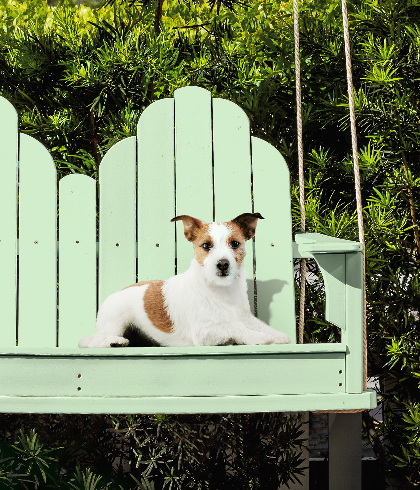 A dog sitting on a green painted outdoor large swing.