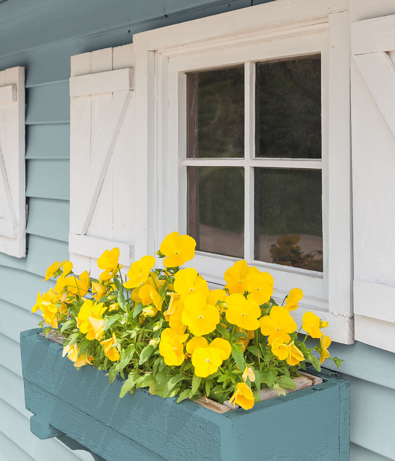 The exterior of a home focused on the window sill with a planter of yellow flowers hanging under the window.